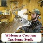 Wilderness Creations Taxidermy